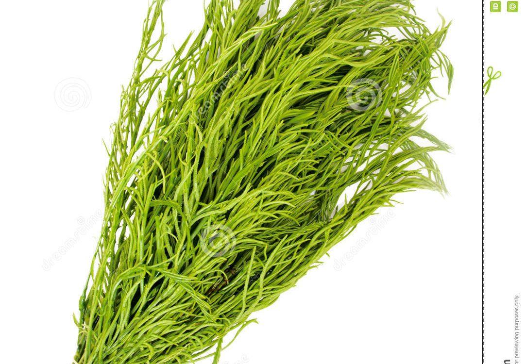 42-The Herb Acacia